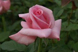 Andrea Stelzer, bloom