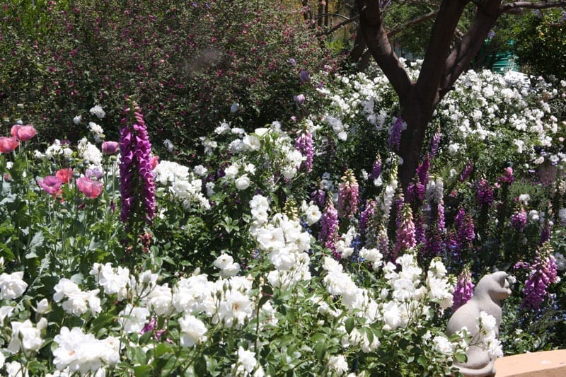 Roses In Garden: Gallery Of Private Rose Gardens
