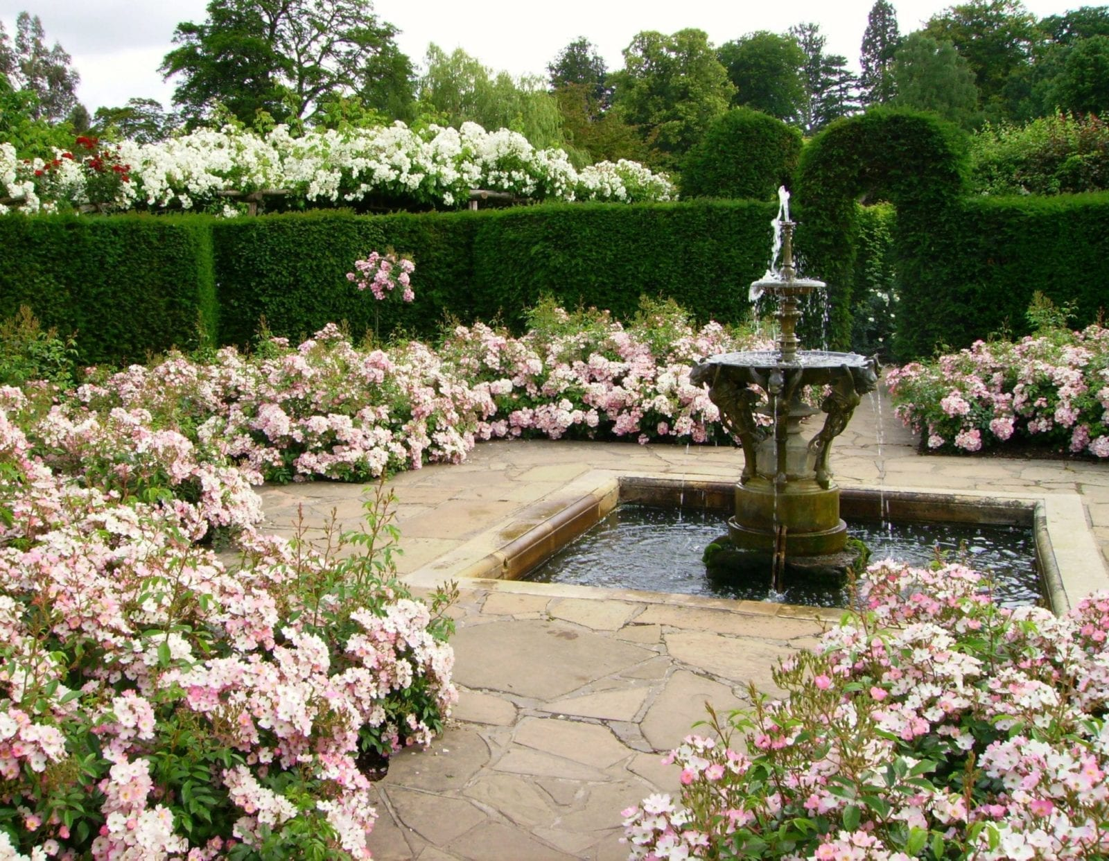 Victorian garden design ludwigs rosesludwigs roses for Rose garden design