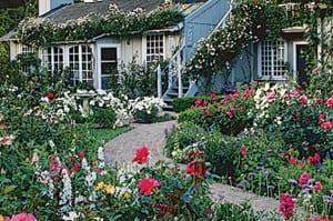 cottage-garden-roses-l
