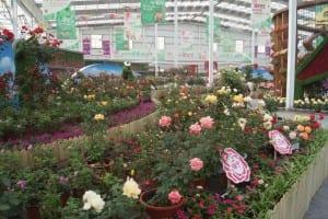 China Rose Show (13)