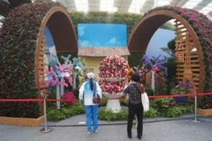 China Rose Show (33)