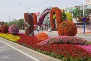 China Rose Show (4)