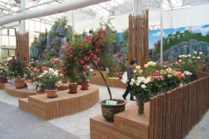 China Rose Show (8)