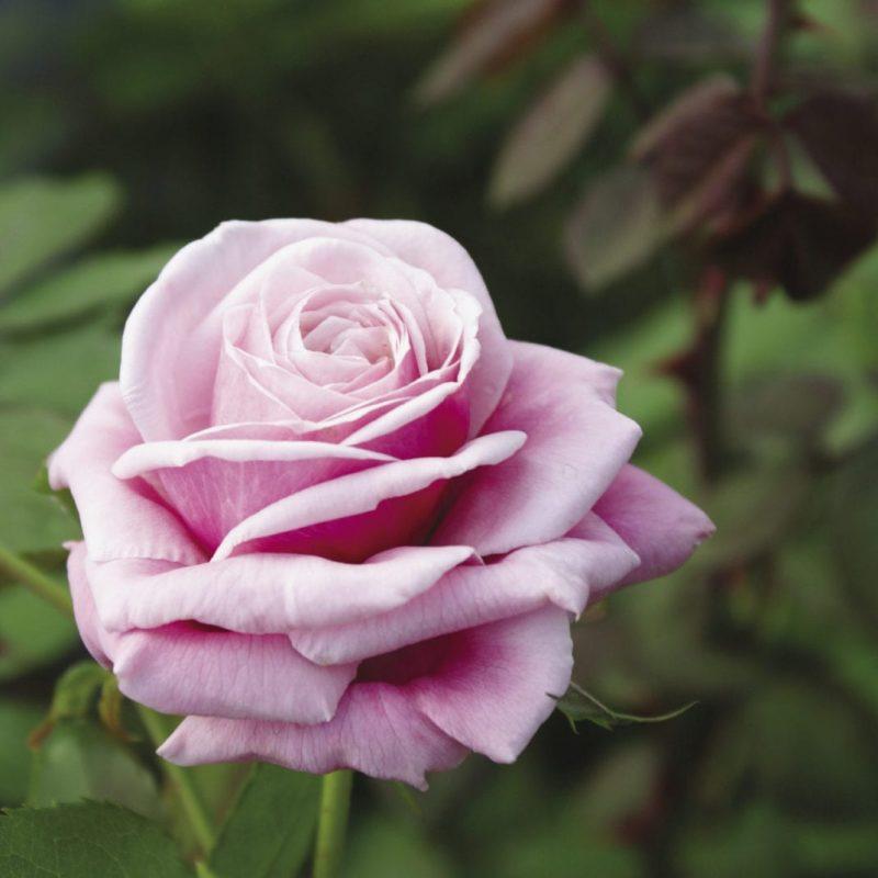 Blossom Time 34_opt